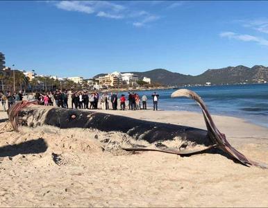 Przerażające odkrycie na plaży. Może wyrzuciło na brzeg zakrwawionego...