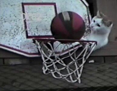 W USA mają nowego Jordana? To kot koszykarz