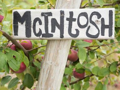 Słynna farma wystawiona na sprzedaż. Tam powstała kultowa odmiana jabłek
