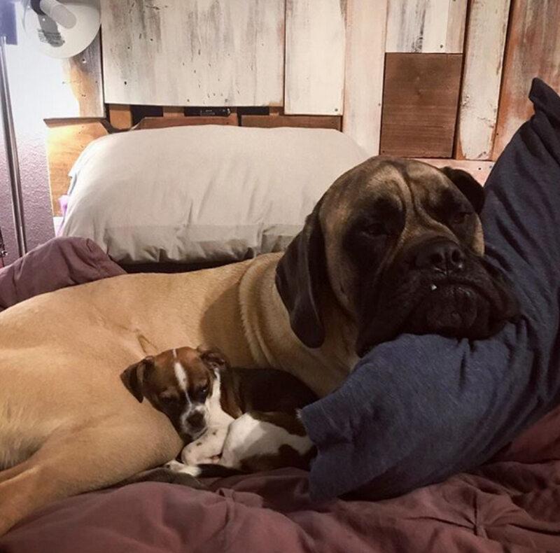 Huey i Bella