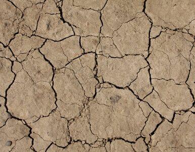 """""""Chłopczyk"""" spowoduje suszę i globalną podwyżkę cen żywności?"""
