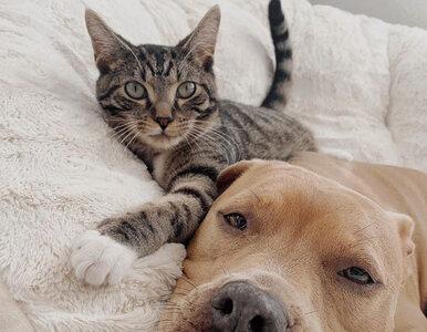 Wyjątkowa przyjaźń połączyła psa i kota. Te zdjęcia nie wymagają komentarza