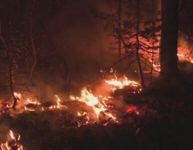 Pożar lasu w Kalifornii. Oskarżony o podpalenie nie przyznaje się do winy