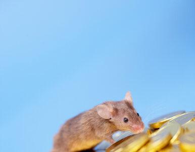 Belka o myszach, które nie zjedzą kasy