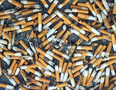 Niedopałki papierosów leżą wszędzie. Skutki są fatalne