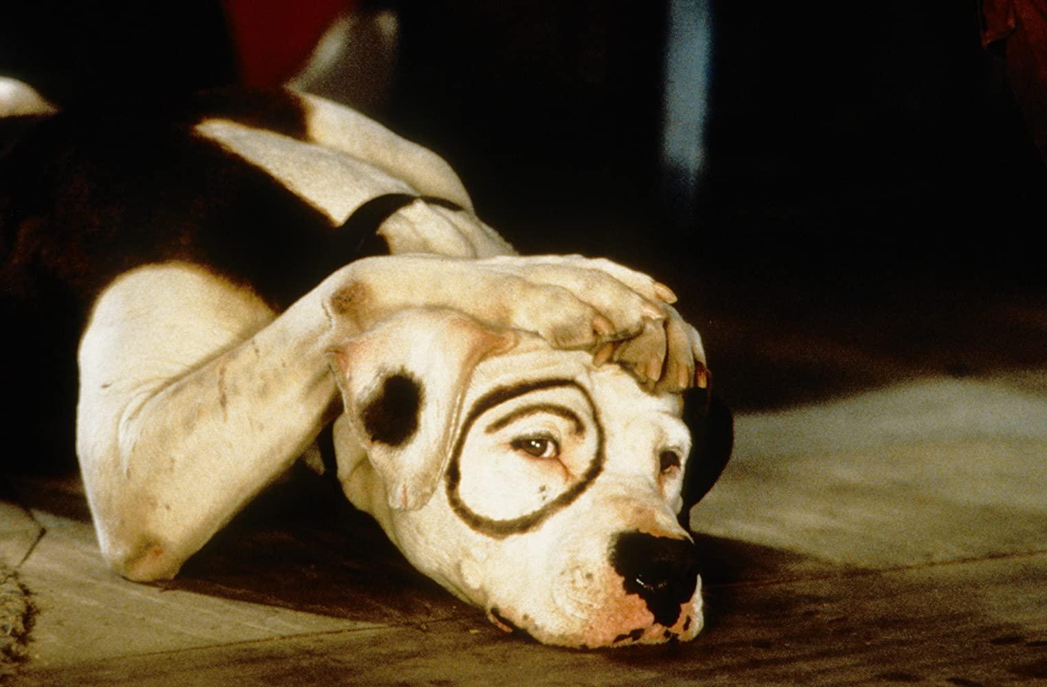 """Teraz coś trudniejszego. Pamiętacie jak nazywał się pies z filmu """"Klan urwisów""""?"""
