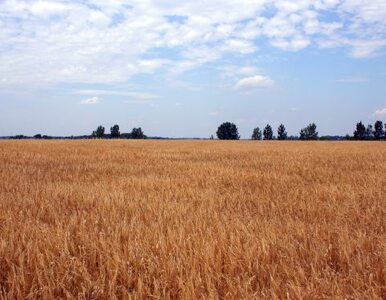 Będą nowe kredyty preferencyjne dla rolników