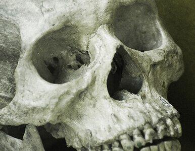 Ludzkie kości znalezione przy nasypie kolejowym w Poznaniu