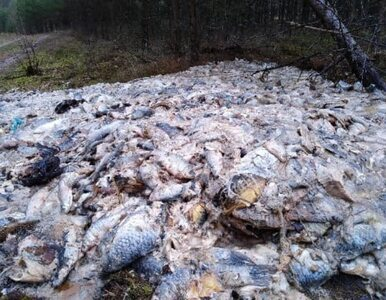 """700 kilogramów martwych ryb w lesie. """"Brak nam słów"""""""