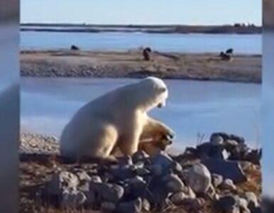 Niedźwiedź i pies na niezwykłym nagraniu. Ten widok wzruszył internautów