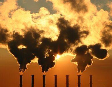 PiS o CO2: dlaczego rząd nie szuka oszczędności w lesie?