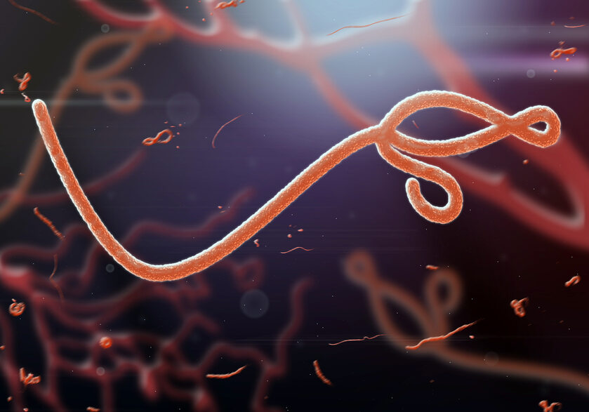 Wirus eboli, zdjęcie ilustracyjne