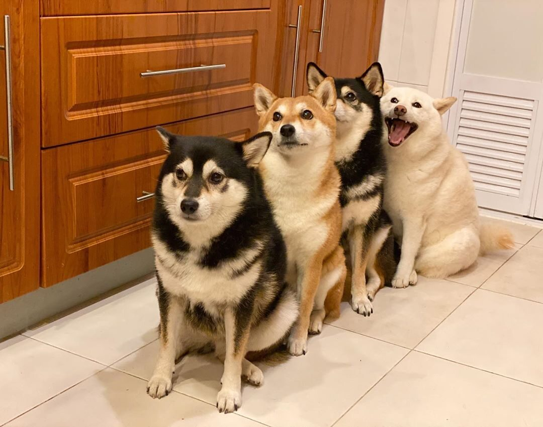 Kikko, Sasha, Momo, Hina