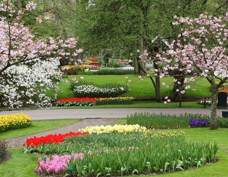 Ogród tulipanowy w holenderskim Lisse