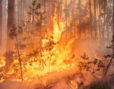 Płonie 20 hektarów traw. W akcji 20 zastępów straży