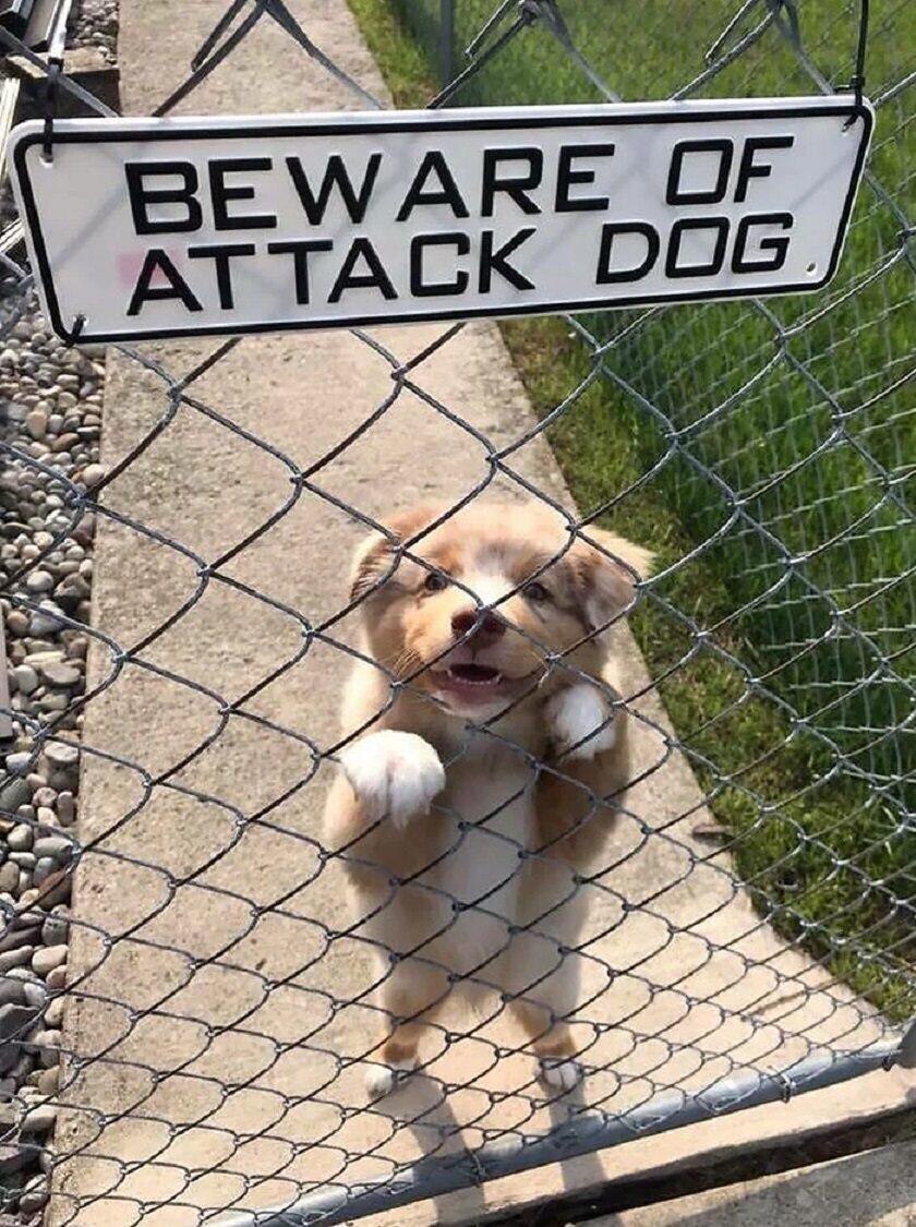 """Groźny"" pies"