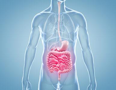 Nieprawidłowa dieta i stosowanie antybiotyków zaburzają mikrobiom jelitowy