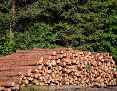 """Wyciął 4 hektary lasu, powołując się na """"lex Szyszko"""". Ma zasadzić go na..."""